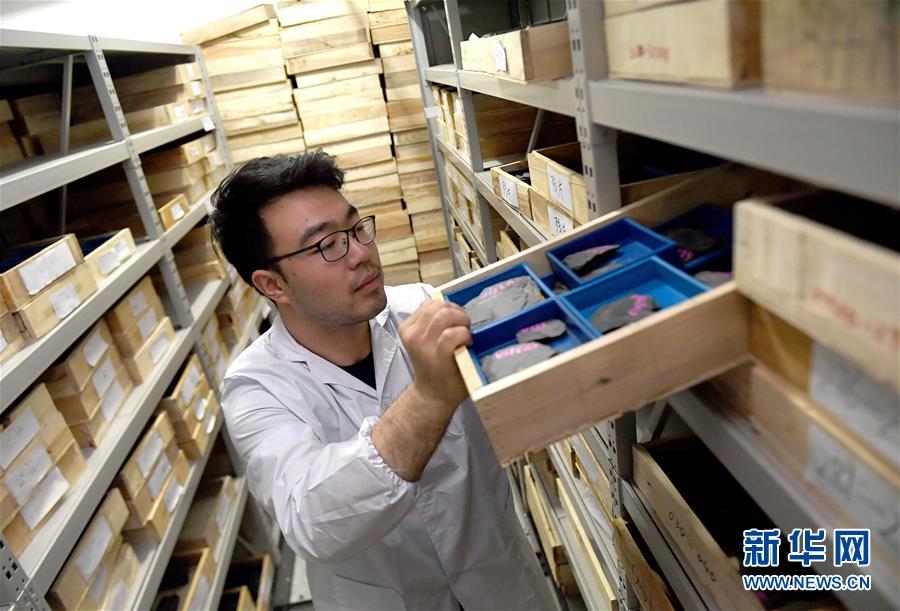 """西北大学地质学系的学生在查找""""清江生物群""""化石(4月8日摄)。新华社记者 刘潇摄"""
