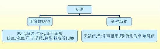 动物分类体系示意图(图片来源于网络)