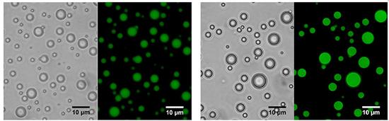 含有原首精氨酸的蛋白质(右)能够具有自吾拼装和相别离的能力,从而产生相通细胞的液滴。