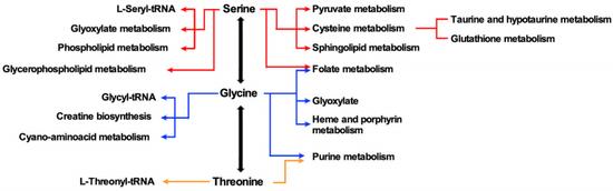 丝氨酸-甘氨酸-苏氨酸代谢轴