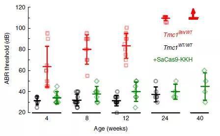 ▲经过治疗的贝多芬小鼠几乎可以和正常小鼠一样听到低至30分贝左右的声音,相当于我们低声耳语的响度(图片来源:参考资料[1])