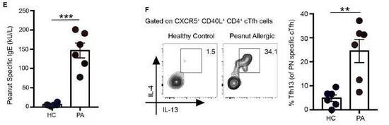 ▲花生过敏患者的血样中检查到特异性的IgE和Tfh13细胞(图片来源:参考资料[1])