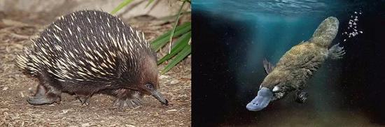 哺乳动物分类(图片来源于网络)