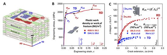图2 (A)三维图解模型描述了样品添载倾向与D&P钢机关结构的有关。(B)工程答力答变弯线。(C)J-积分阻力弯线。