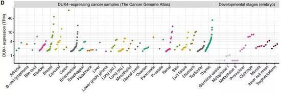 ▲DUX4蛋白在各种组织类型的癌症中特异性表达(图片来源:参考资料[1])