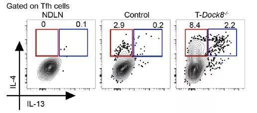 ▲在缺失Dock8的小鼠中发现的这群Tfh细胞分泌独特的细胞因子组合,其中包括IL-13(图片来源:参考资料[1])