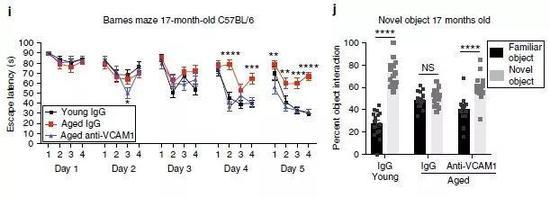 ▲行为学实验结果表明,阻断VCAM1后,年老小鼠的学习记忆能力恢复为年轻小鼠的水平(图片来源:参考资料[1])
