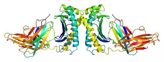 HFE蛋白结构。图片来源:Wikipedia