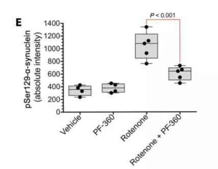 ▲LRRK2抑制剂减少了α-突触核蛋白的积聚(图片来源:《Science Translational Medicine》)