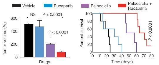 ▲靶向药物与针对DNA修复受损的药物联合用药,在胰腺癌小鼠身上获得了更好的效果(图片来源:参考资料[1])