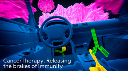"""△图中文字:""""癌症疗法:释放免疫系?#36710;?#21049;车"""""""