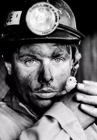美国矿工与金丝雀,在过去一百年时间内金丝雀都以哨兵的身份挽救了无数矿工的生命