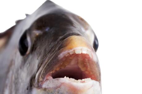 救命 这种鱼是把爷爷的假牙偷了吗?