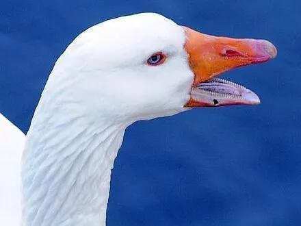 图9. 鸟类的喙