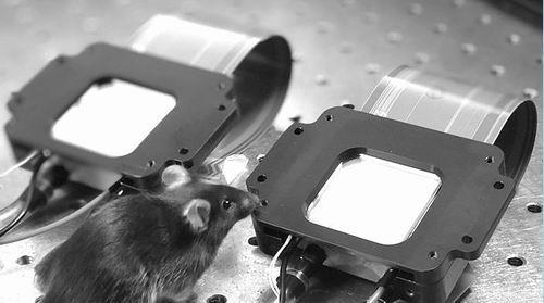 研究人员使用空间光调制器将激光束转换成全息图,刺激小鼠大脑中的特定神经元。图片来源:斯坦福大学