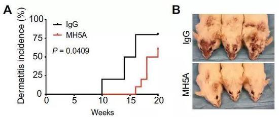 ▲激活PD-1H的单抗(MH5A)推迟红斑狼疮小鼠发病并减轻症状(图片来源:参考资料[1])