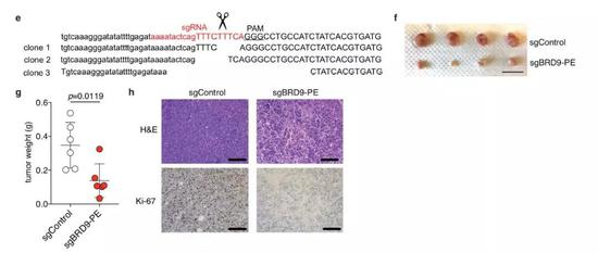 ▲用CRISPR技术矫正错误的RNA剪接,可以缩小小鼠的肿瘤(图片来源:参考资料[1])
