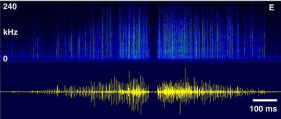 交配时发出声音的波形图