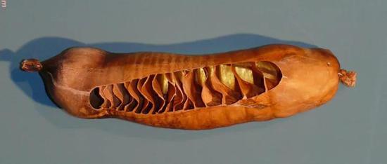 鲨鱼肠道内的螺旋瓣。图片来源:图源wikipedia