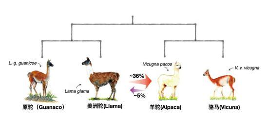 图5 进化关系示意图