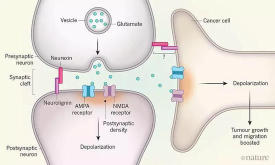 癌细胞竟然会伪装成神经细胞 促进恶性生长