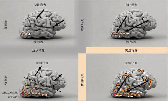 2006年,斯坦尼斯拉斯・迪昂和同事们绘制了这张图像,以区分大脑处理一个视觉刺激时所呈现的基本状态。颜色的深浅表明该部位大脑活动的强度,弯曲的白色箭头表明了这些部位之间的相互作用。较粗的黑色箭头指示注意力的整体方向(转向刺激或偏离刺激)。