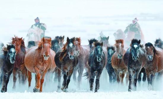 """图1 冷对种马的""""淬炼"""",图片来源:《黑龙江日报》,贾维远摄"""