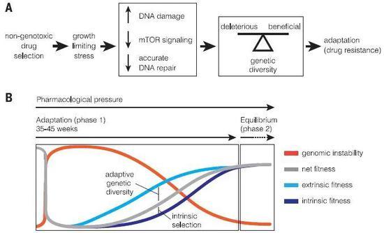 ▲癌细胞面对靶向药物的选择压力,通过两个阶段增加遗传多样性、适应环境(图片来源:参考资料[1])