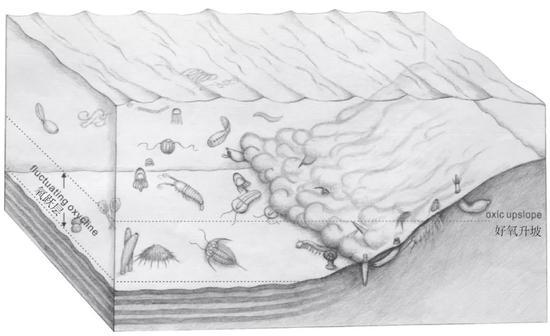 清江生物群生态位、化变层及保存过程复原图。图片来源:参考文献[2]