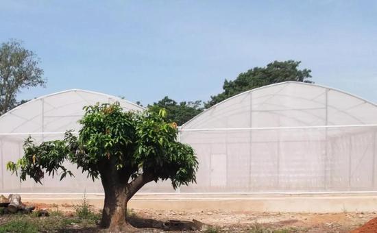 ▲这些设置在西非的大棚提供了良好的模拟环境(Credit:Etienne Bilgo)