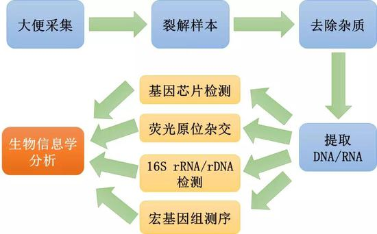 图4 传统大便微生物组分析的大致流程,每个样本处理的步骤之间往往还需要多次清洗 (图片来源:作者自制)
