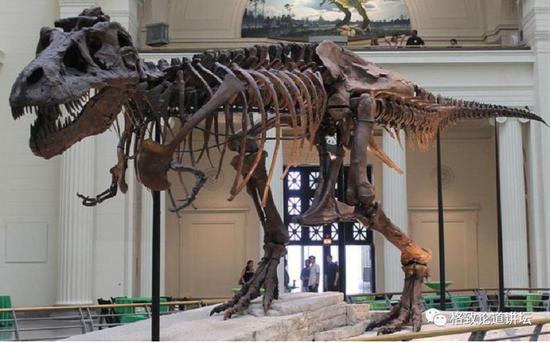 这种亿万年不消失的物质,让我们得到了一份恐龙食谱