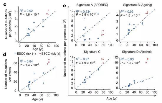 ▲长期抽烟喝酒的高风险者,基因突变的速度加快(图片来源:参考资料[1])