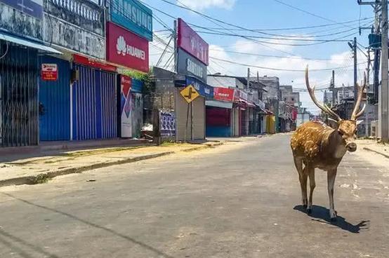封国后的印度街道