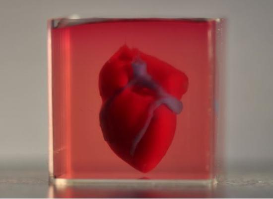 3D打印出的心臟(圖片來源:特拉維夫大學官網)