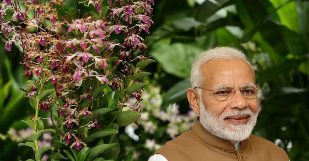 印度总理莫迪推出网络平台:连接科技公司与金融机构