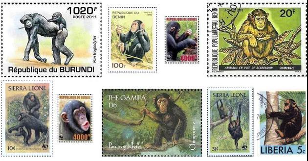 · 经常在非洲国家邮票上出现的黑猩猩