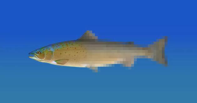 ▲ 图片来自:美国鱼类和野生动物管理局 / VICTOR TANGERMANN