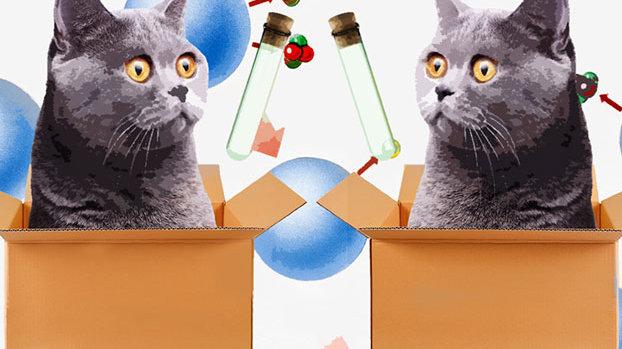 """在多重宇宙中,你就不用担心自己会""""好奇心害死猫""""了。"""