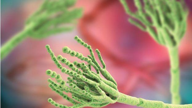 青霉素又称为盘尼西林,本身具有多种用途,如抗生素、避孕药和奶酪生产