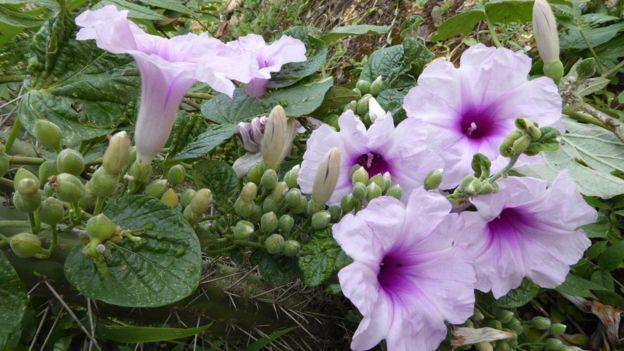 雾林中助长的开花植物