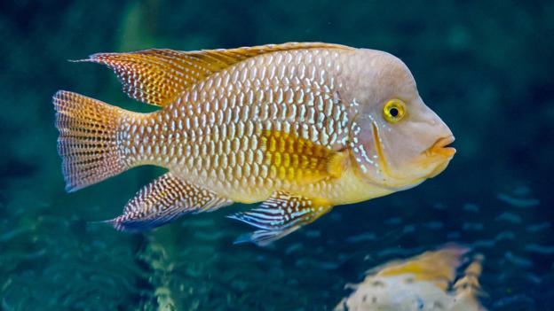不止7秒记忆:鱼比你想象的要聪明