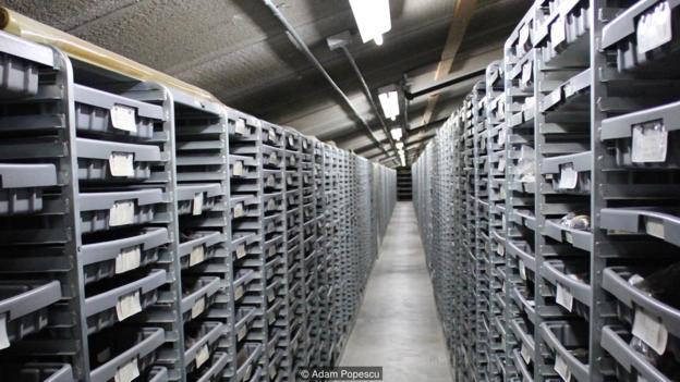 拉布雷亚沥青坑的化石发掘工作依然在继续,保存着大量化石