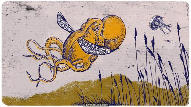 """蟾蜍能漂浮在空中,变成""""齐柏林飞艇""""吗?"""