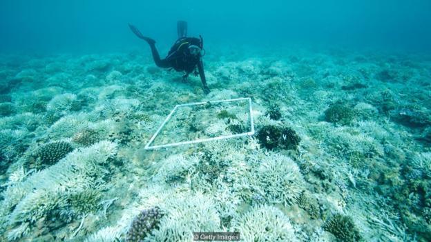 在对珊瑚的一项研究中,样本中含有的防晒霜污染水平已经高到足以导致珊瑚畸形和死亡