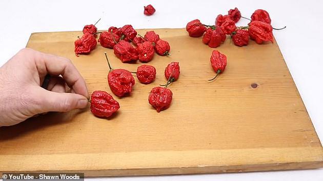 """""""卡罗来纳死神""""辣椒的斯科威尔值(辣度单位)达到220万,被认为是世界上最辣的辣椒。相比之下,墨西哥辣椒的斯科威尔值仅为2500。"""
