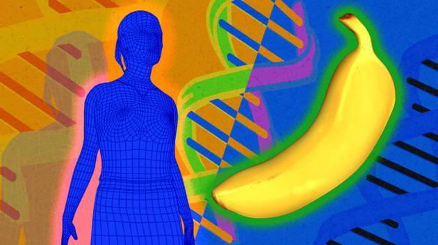 图中左侧是一种动物,右侧是一种植物,但两者的DNA仍有一些相同之处。