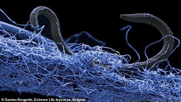 地下深處發現龐大生態系統:有以殭屍狀態存活的細菌|微生物|生物圈|細菌_新浪科技_新浪網
