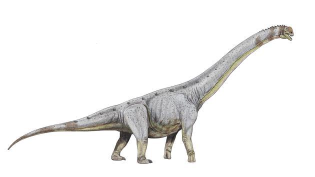 巨龙类是八仙岗潜在的造迹者