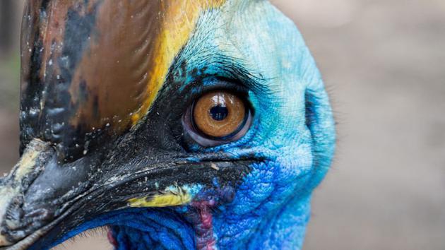鸟类是否可以被认为是真正的恐龙?鸟何...
